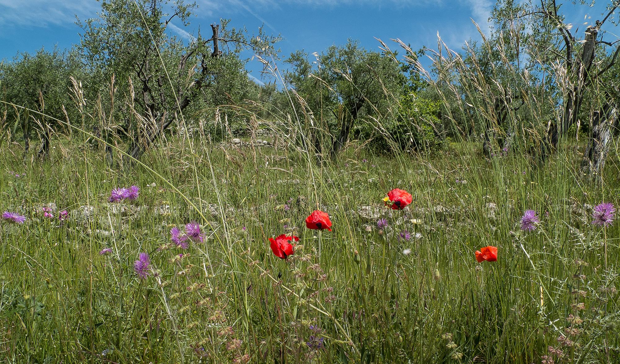 Fêtes traditionnelles ou insolites<br>– Le printemps sur la Côte d'Azur –