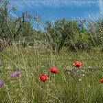 Fêtes traditionnelles ou insolites <br>Le printemps sur la Côte d&rsquo;Azur