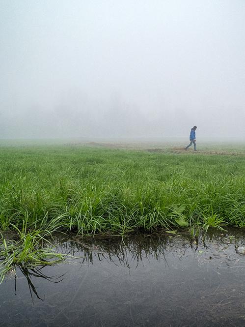 rizières de Lomellina en Lombardie