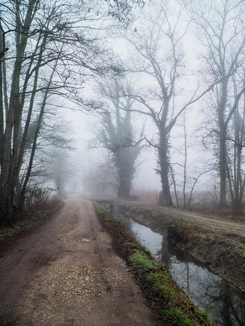 Sentier du parc Ticino dans la brume