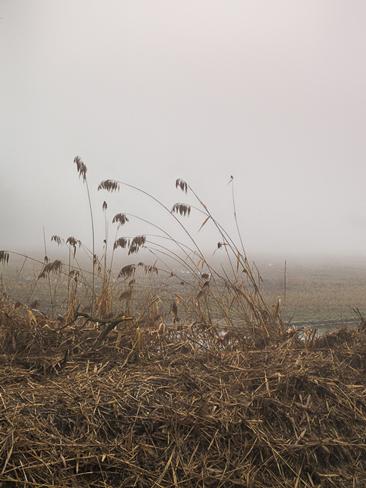 La nature dans les plaines du Pô