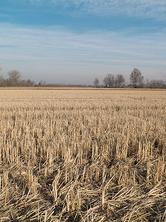 rizières de Vigevano
