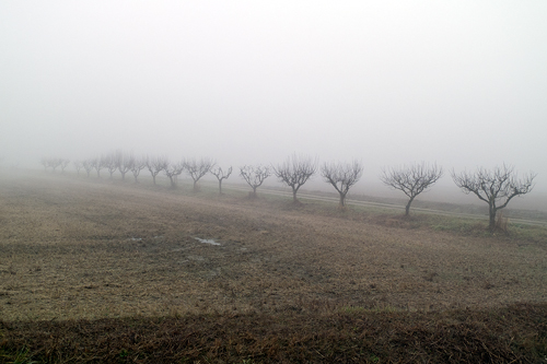 La Lomellina dans la brume hivernale