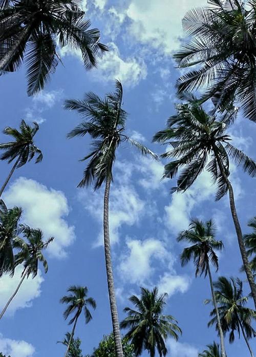 ciel et palmiers à zanzibar