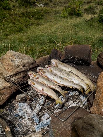 pêche de truites dans la rivière Toce